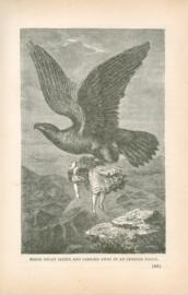 Marie Delex Seized And Carried Away By An Immense Eagle