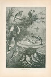 Group Of Cage Birds