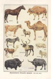 Representative Domestic Animals
