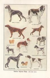 Twelve typical dogs