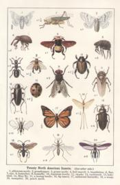 Twenty north american insects